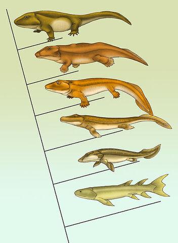 File:Fishapod evolution.jpg
