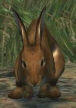 Dragon's Dogma - Rabbit02
