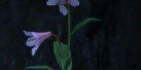 Noonflower