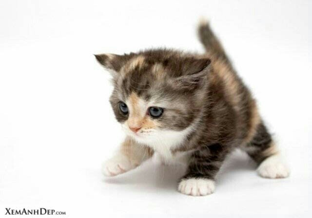 File:Cute cat102 (1).jpg