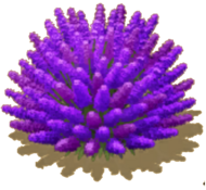 PurplePuffPlant