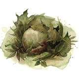 File:Dragon egg.jpg