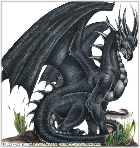 File:Black European Dragon.jpg