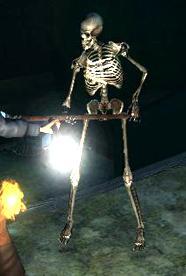 Datei:Skelett.jpg