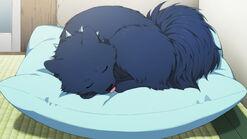 Ren sleeping