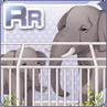 Elephants At The Zoo Gray