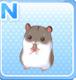 HamsterGray