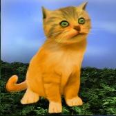 File:Kitten.png