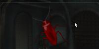 Huge Cockroach