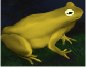 File:Large Toad.png