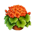 Coll arborday geranium