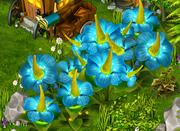 Blue flowers resource