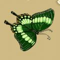 Coll butterflies sailboat