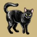 Coll superstitious black cat