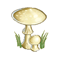 Coll mushroom death cap