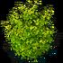 Res bush green