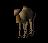 Camel Pet