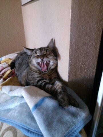 File:Myfunnycat!.jpg