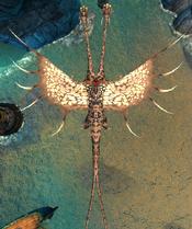 Tzipple wingspan