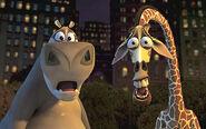 Gloria-and-Melman-gloria-the-hippopotamus-24316192-360-226