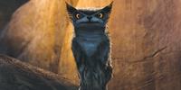 Bearowl/Gallery