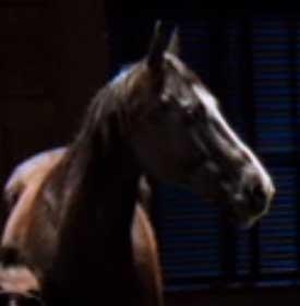 File:Bad Horse.jpg