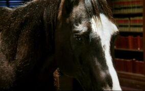 Badhorse2