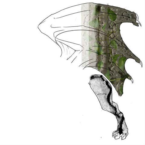 File:Skin guardian f dragon.jpg