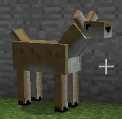 File:Female Deer.jpg