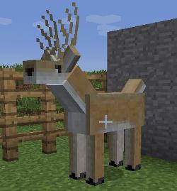 File:Male Deer.jpg