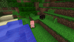 Boar and pig