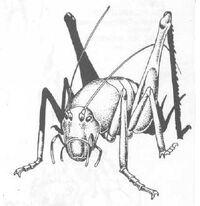Cave cricket