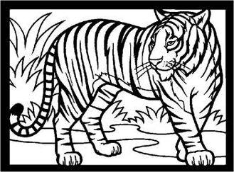 Tiger rdax 65