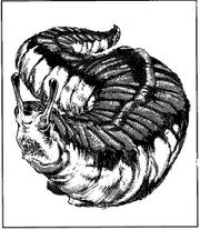 Haundar