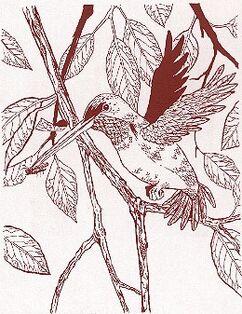 Lyrabird