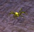 File:Yellow Spider.jpg