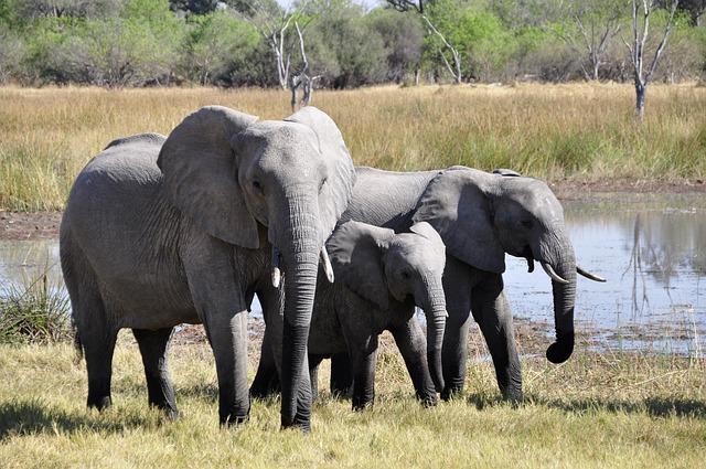 File:Elephant-55255 640.jpg