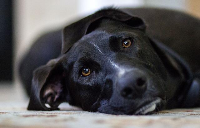 File:Dog-448988 640.jpg