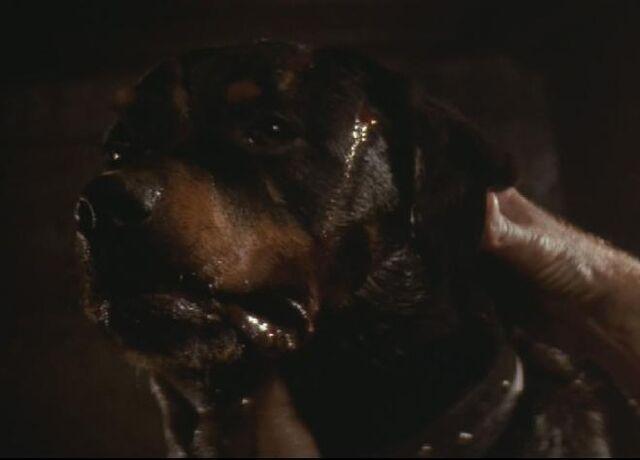 File:659px-Spike the dog.jpg