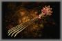Phoenix Talon (DW3)