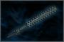 Power Rod (DW4)