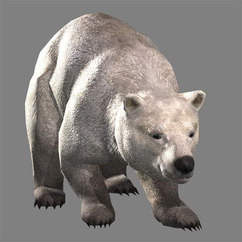 File:Polar Bear (DW8 DLC).jpg