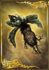 Mandrake (DWB)