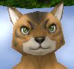 Old male feline