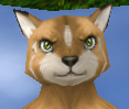 Intense male feline