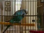 Stan Porter's Budgie (Pat and Mo)