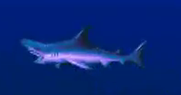 File:Sharkmorph.png