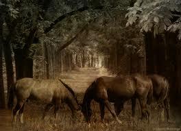 File:Horseswoods6.jpg