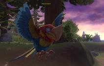 MacawRaptor