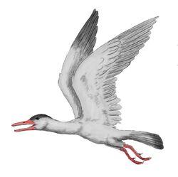 Ichthyornis2